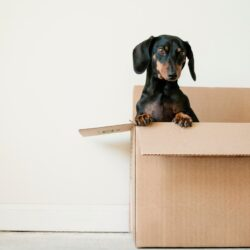 blog guest post picture image The Essentials Guide for Moving House